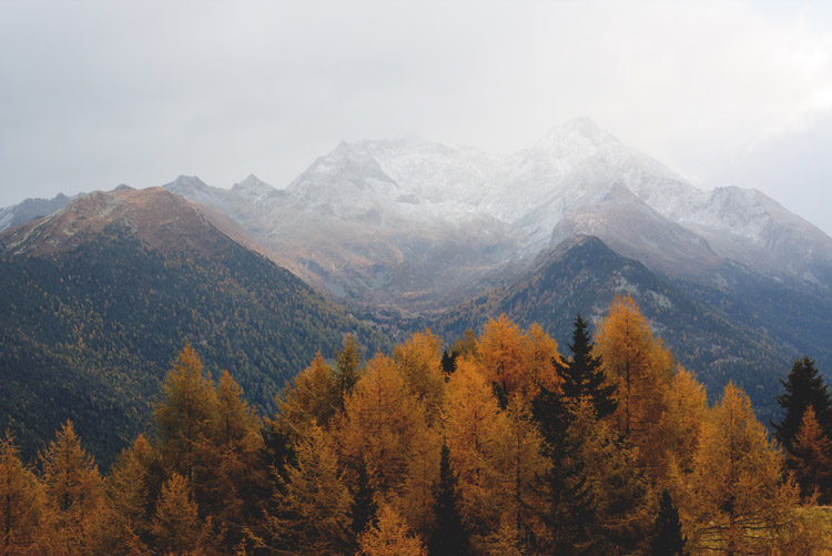 autumn leaves in the mountains
